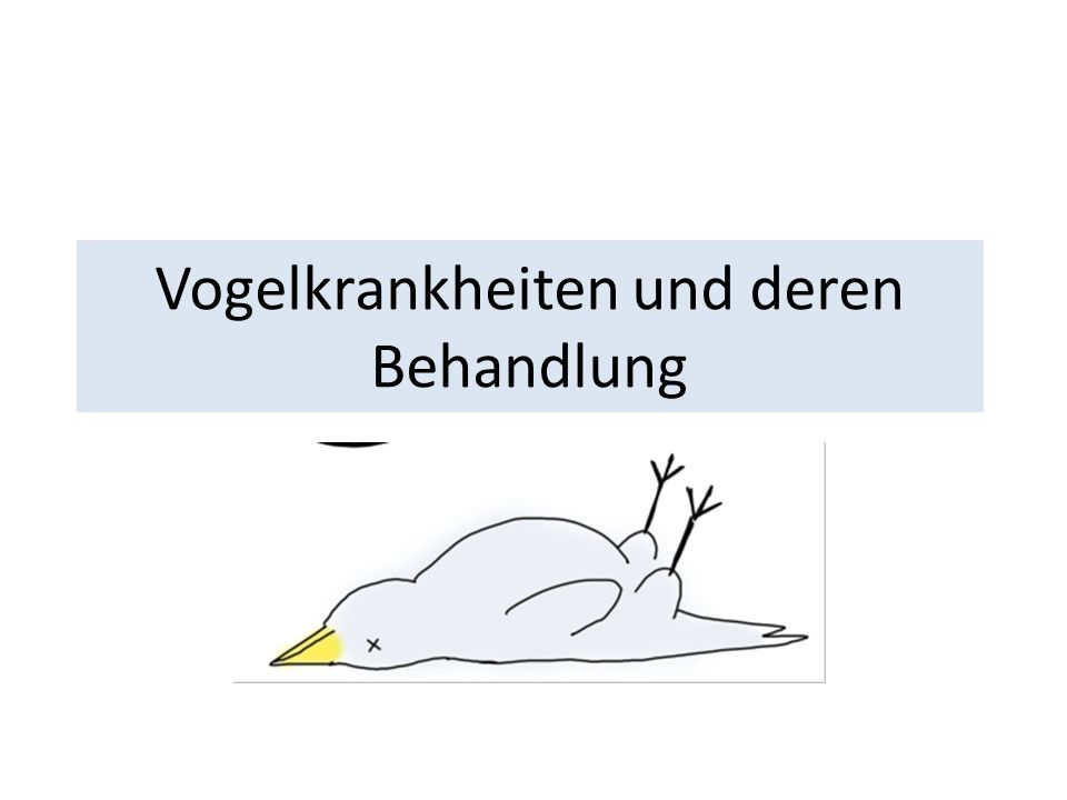 Vogelkrankheiten und deren Behandlung