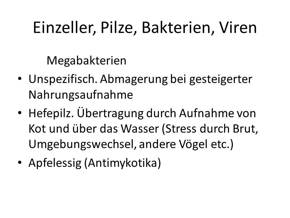 Einzeller, Pilze, Bakterien, Viren