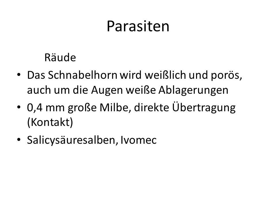 Parasiten Räude. Das Schnabelhorn wird weißlich und porös, auch um die Augen weiße Ablagerungen. 0,4 mm große Milbe, direkte Übertragung (Kontakt)