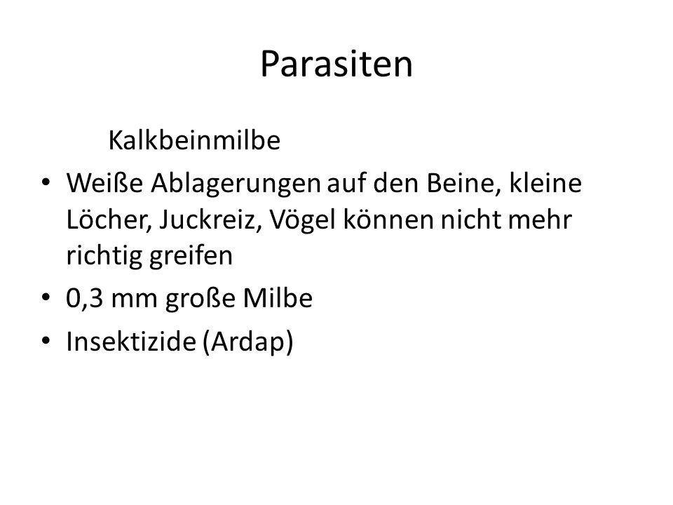 Parasiten Kalkbeinmilbe