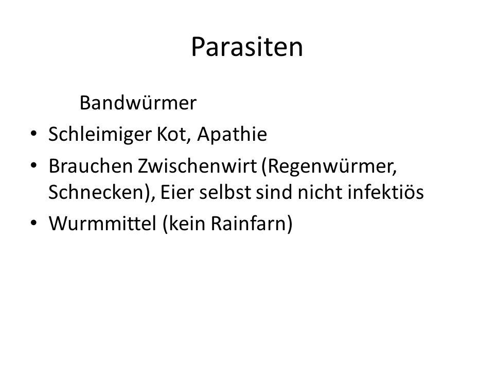 Parasiten Bandwürmer Schleimiger Kot, Apathie