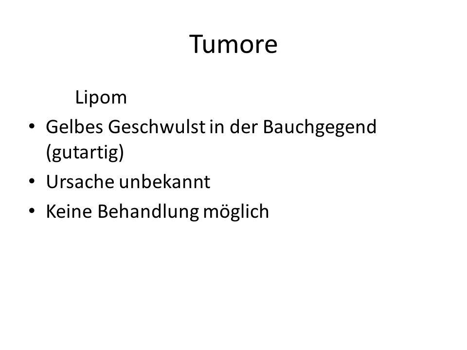 Tumore Lipom Gelbes Geschwulst in der Bauchgegend (gutartig)