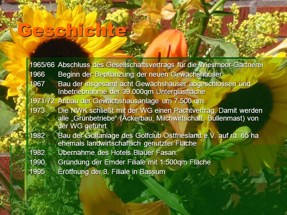 Geschichte 1965/66 Abschluss des Gesellschaftsvertrags für die Wiesmoor-Gärtnerei. 1966 Beginn der Bepflanzung der neuen Gewächshäuser.