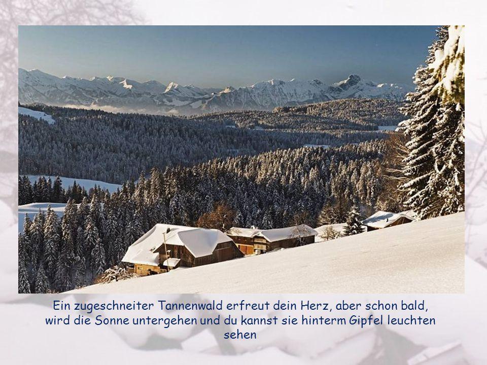 Ein zugeschneiter Tannenwald erfreut dein Herz, aber schon bald, wird die Sonne untergehen und du kannst sie hinterm Gipfel leuchten sehen