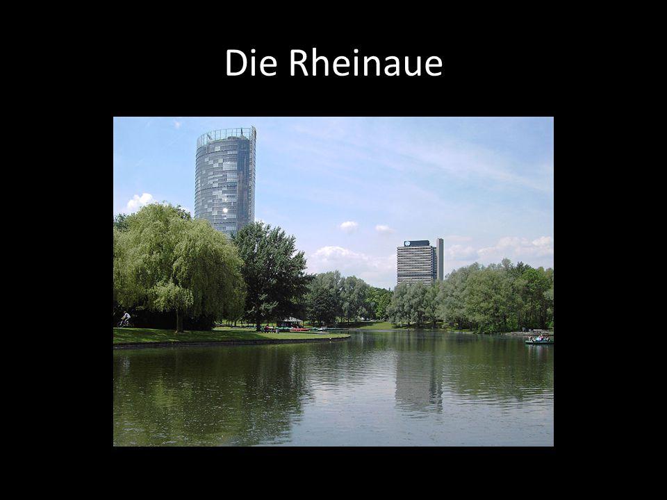 Die Rheinaue
