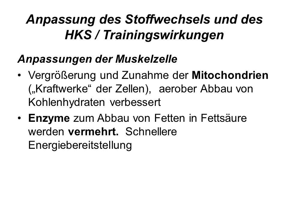 Anpassung des Stoffwechsels und des HKS / Trainingswirkungen