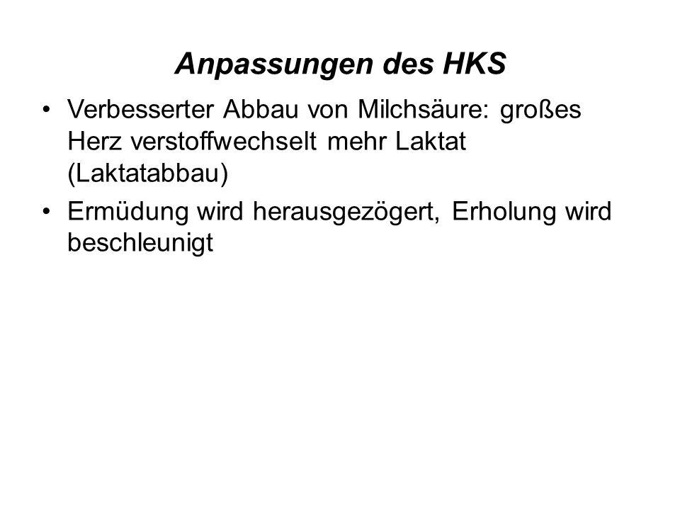 Anpassungen des HKS Verbesserter Abbau von Milchsäure: großes Herz verstoffwechselt mehr Laktat (Laktatabbau)