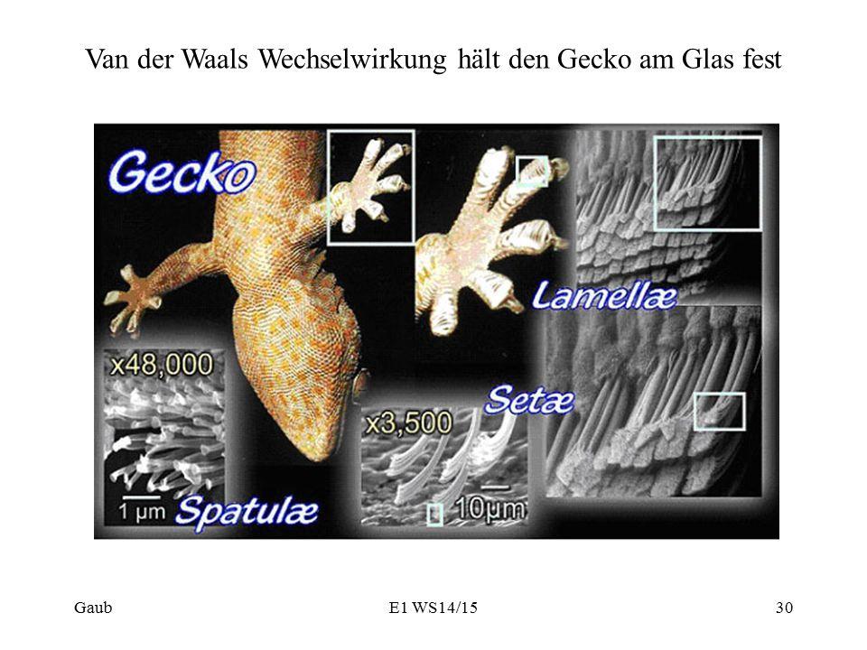 Van der Waals Wechselwirkung hält den Gecko am Glas fest