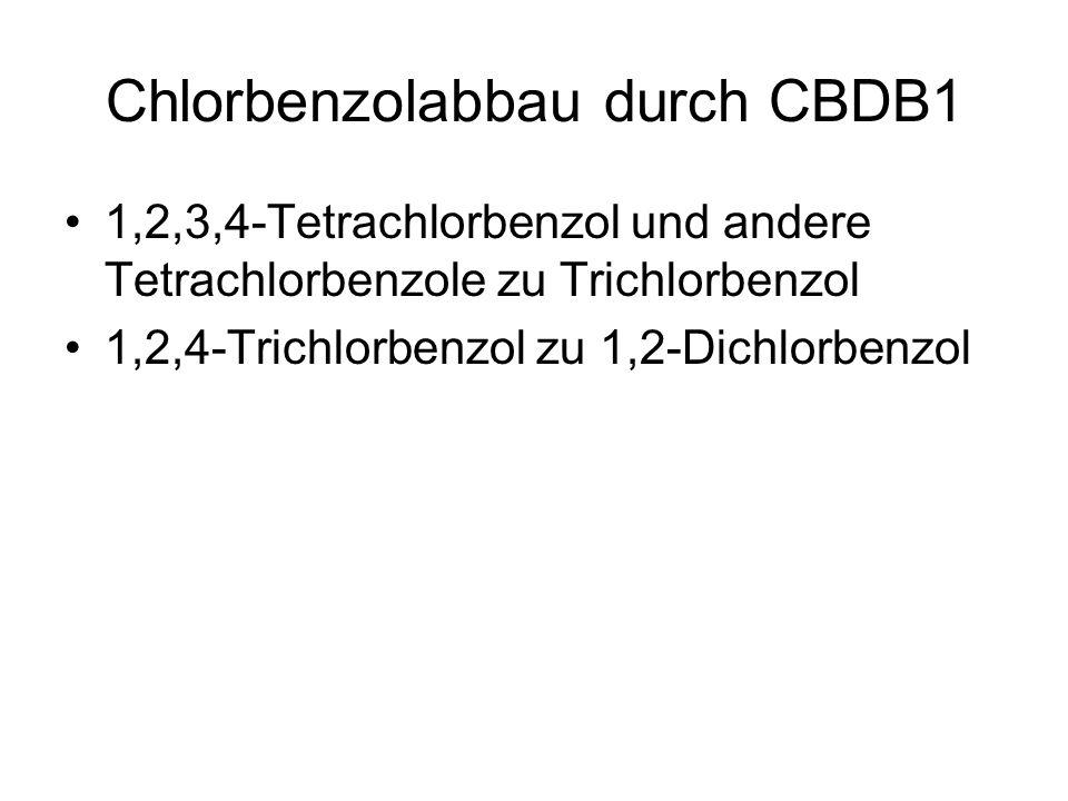 Chlorbenzolabbau durch CBDB1