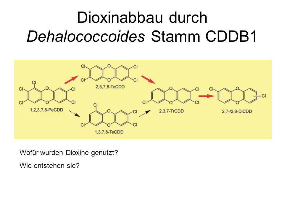 Dioxinabbau durch Dehalococcoides Stamm CDDB1