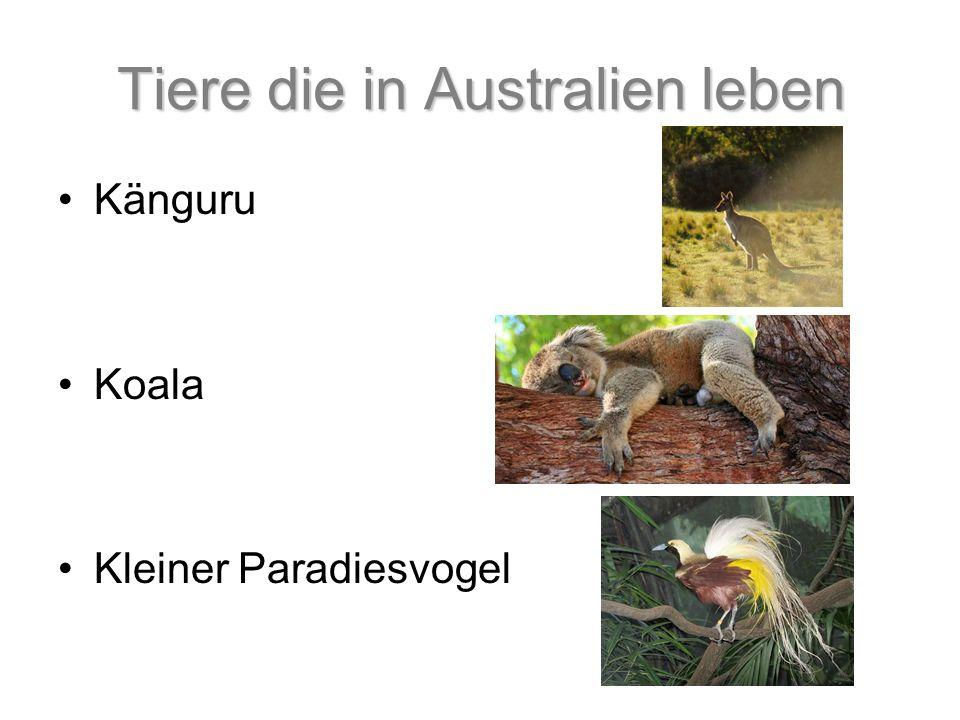 Tiere die in Australien leben