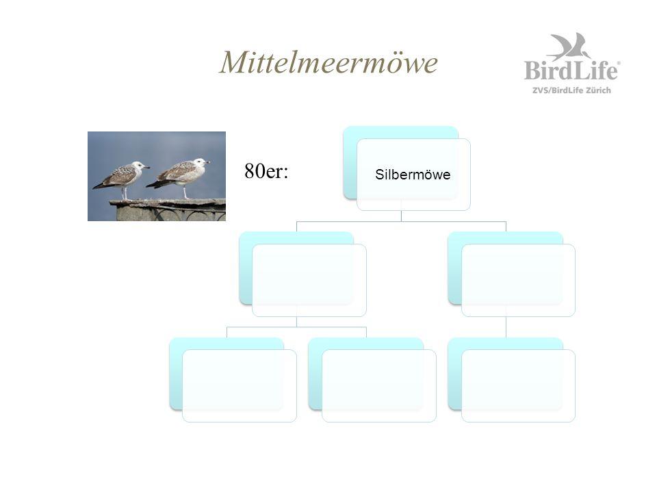 Mittelmeermöwe Silbermöwe 80er: