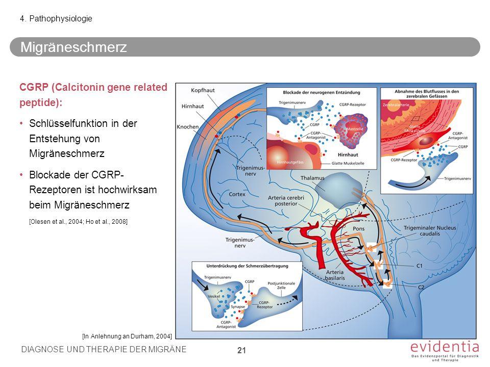 Migräneschmerz CGRP (Calcitonin gene related peptide):