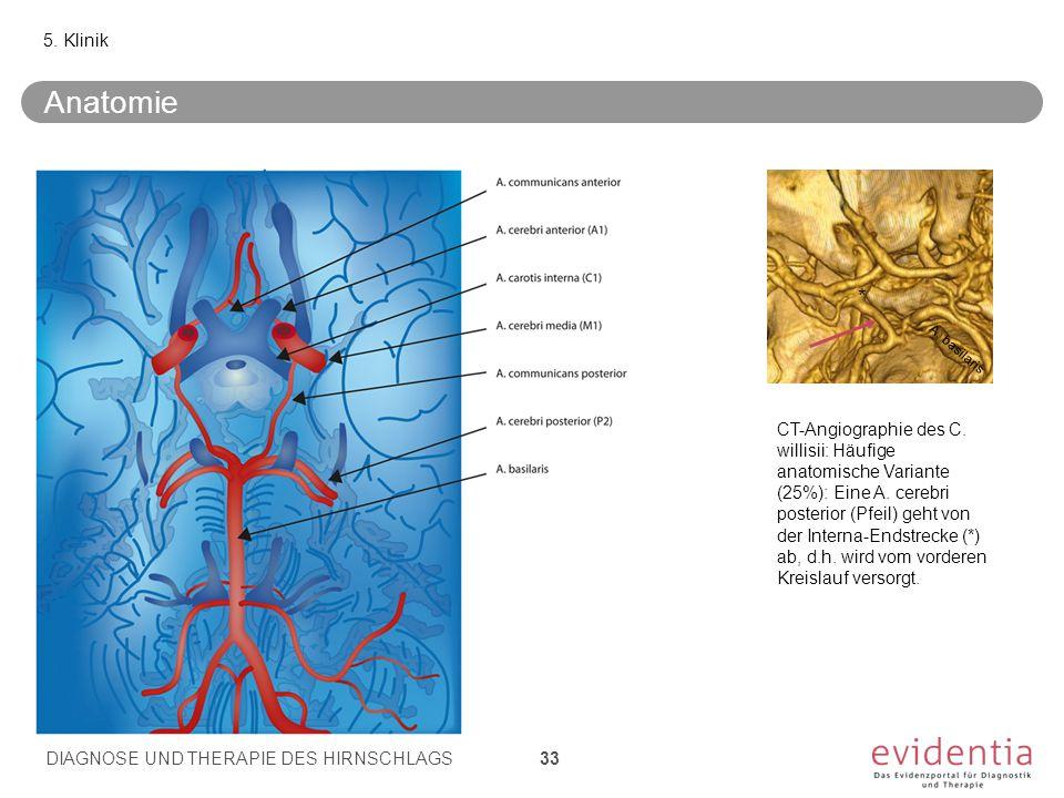 5. Klinik Anatomie. * A. basilaris.