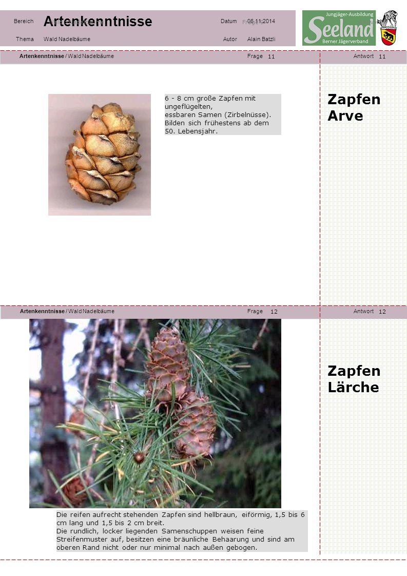 Zapfen Arve Zapfen Lärche 6 - 8 cm große Zapfen mit ungeflügelten,