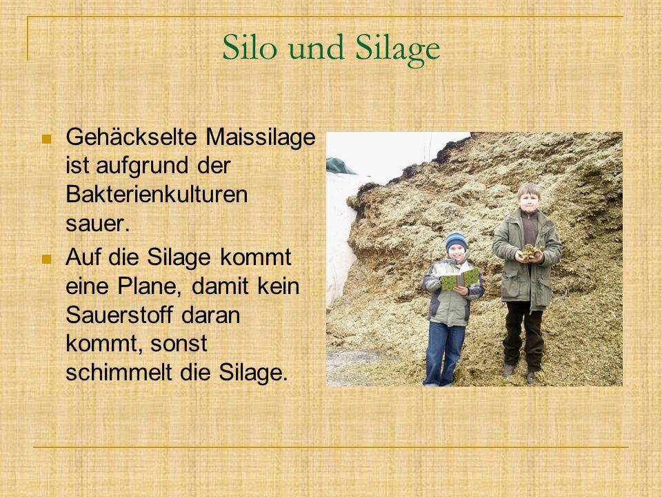 Silo und Silage Gehäckselte Maissilage ist aufgrund der Bakterienkulturen sauer.