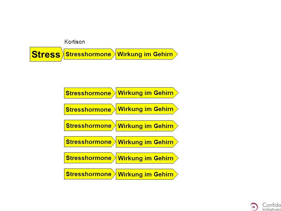 Stress Stresshormone Wirkung im Gehirn Stresshormone Wirkung im Gehirn