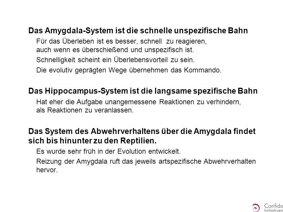 Das Amygdala-System ist die schnelle unspezifische Bahn