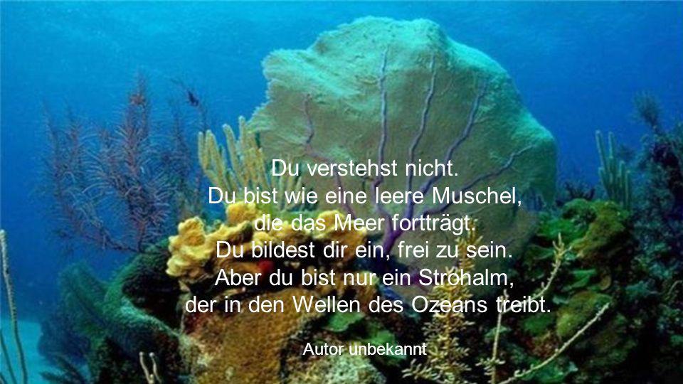 Du verstehst nicht. Du bist wie eine leere Muschel, die das Meer fortträgt. Du bildest dir ein, frei zu sein. Aber du bist nur ein Strohalm, der in den Wellen des Ozeans treibt.
