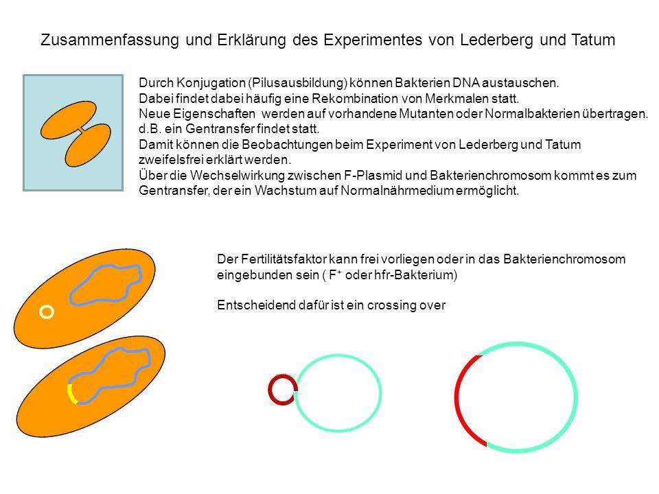 Zusammenfassung und Erklärung des Experimentes von Lederberg und Tatum