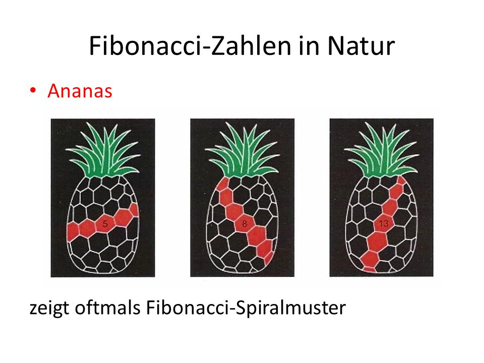 Fibonacci-Zahlen in Natur