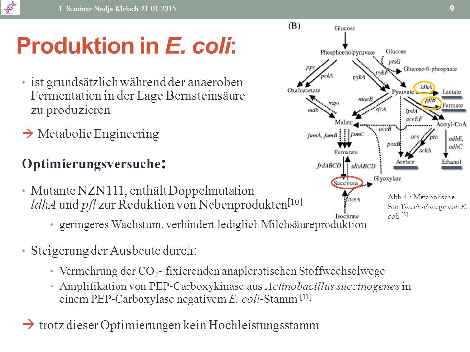 Produktion in E. coli: Optimierungsversuche: