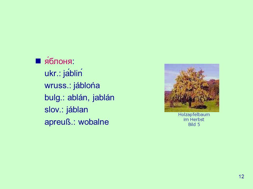 я́блоня: ukr.: jábliń wruss.: jáblońa bulg.: ablán, jablán
