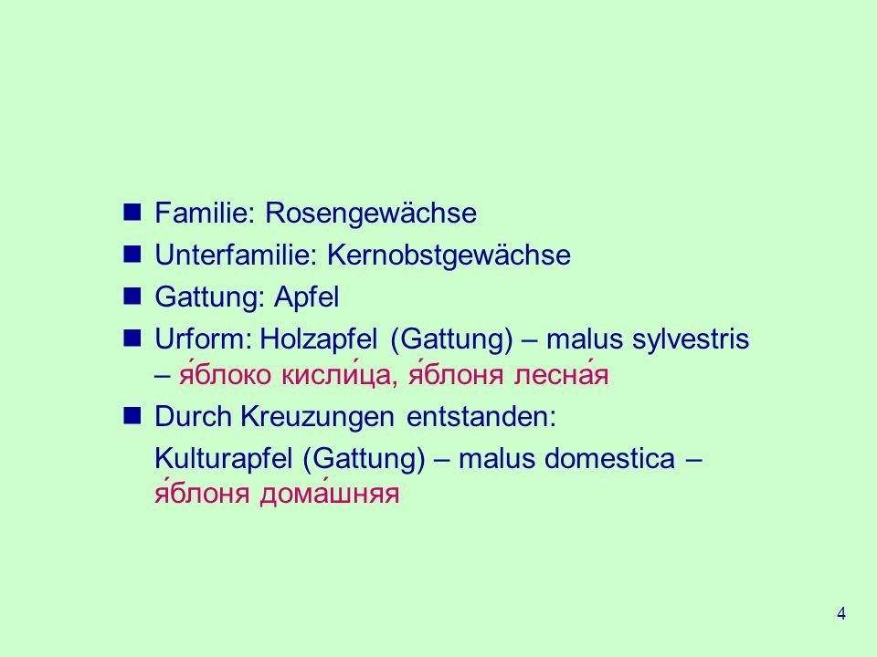 Familie: Rosengewächse
