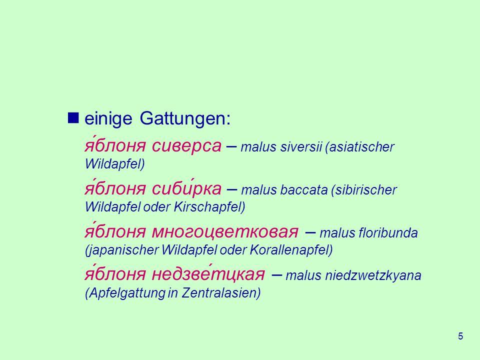 einige Gattungen: я́блоня сиверса – malus siversii (asiatischer Wildapfel) я́блоня сиби́рка – malus baccata (sibirischer Wildapfel oder Kirschapfel)