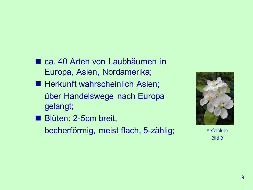 ca. 40 Arten von Laubbäumen in Europa, Asien, Nordamerika;