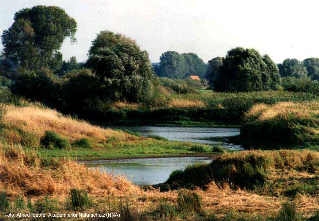 Foto: Alfred Toepfer Akademie für Naturschutz (NNA)