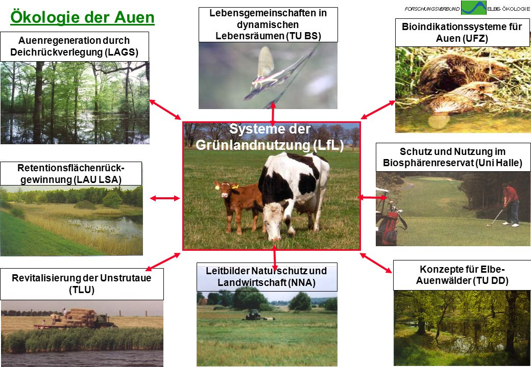 Ökologie der Auen Systeme der Grünlandnutzung (LfL)