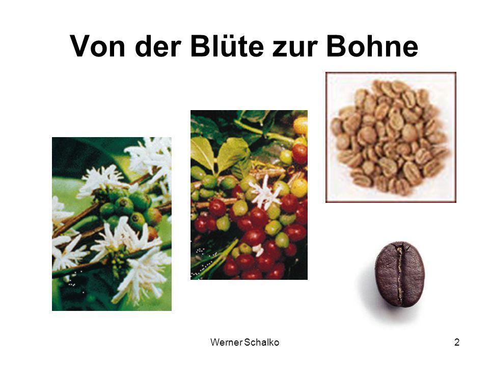 Von der Blüte zur Bohne Werner Schalko