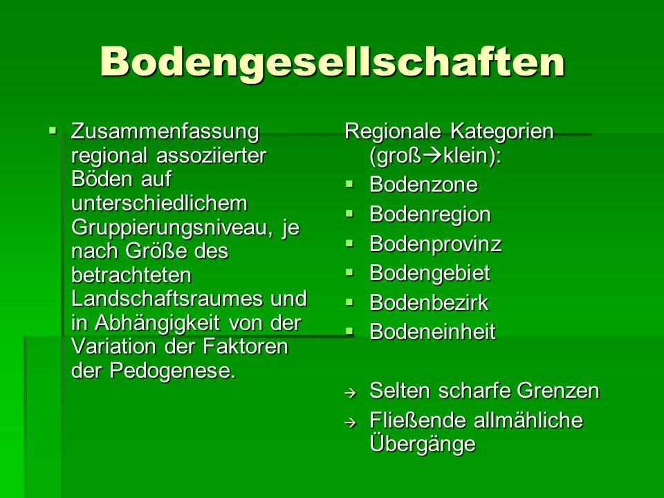 Bodengesellschaften
