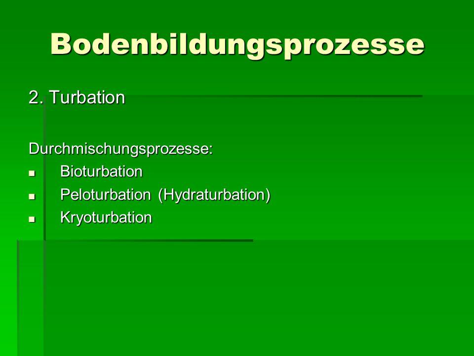 Bodenbildungsprozesse