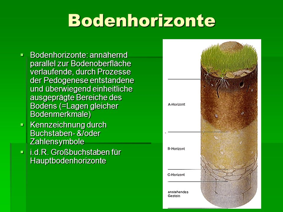 Bodenhorizonte