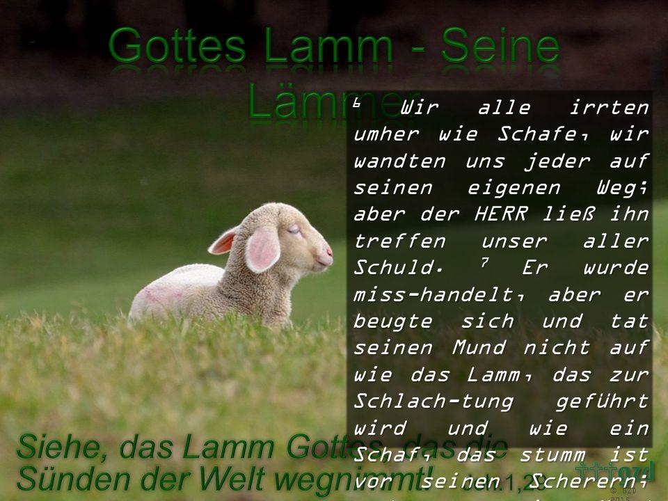 6 Wir alle irrten umher wie Schafe, wir wandten uns jeder auf seinen eigenen Weg; aber der HERR ließ ihn treffen unser aller Schuld. 7 Er wurde miss-handelt, aber er beugte sich und tat seinen Mund nicht auf wie das Lamm, das zur Schlach-tung geführt wird und wie ein Schaf, das stumm ist vor seinen Scherern; und er tat seinen Mund nicht auf.