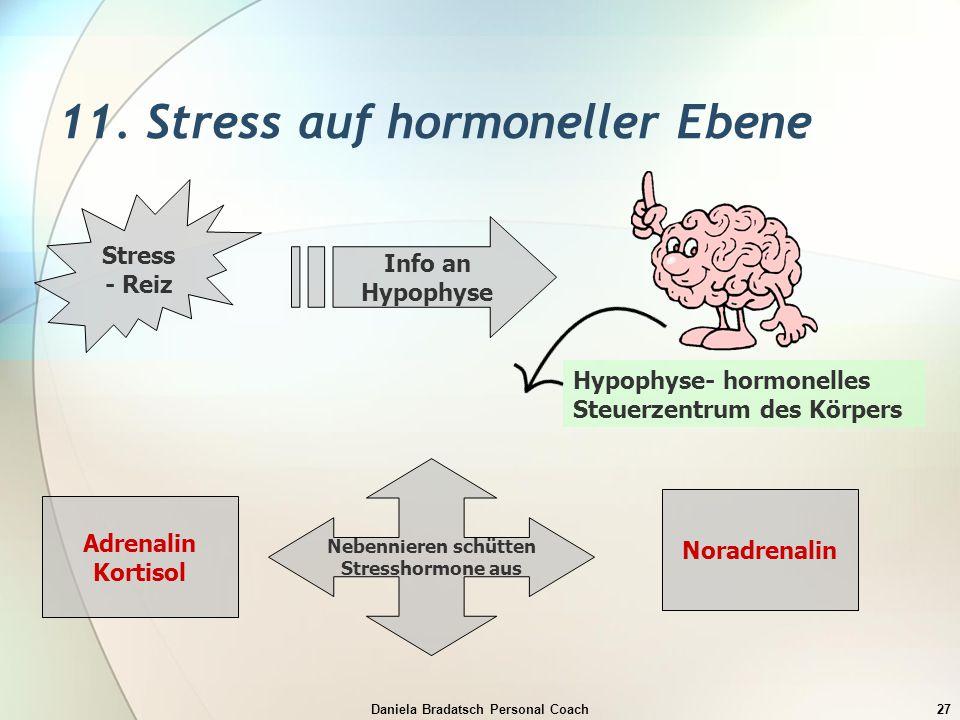 11. Stress auf hormoneller Ebene