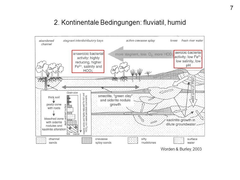 2. Kontinentale Bedingungen: fluviatil, humid