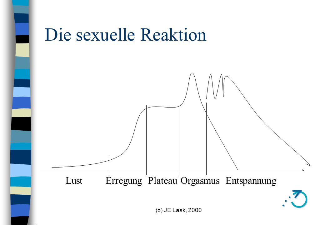 Die sexuelle Reaktion Lust Erregung Plateau Orgasmus Entspannung