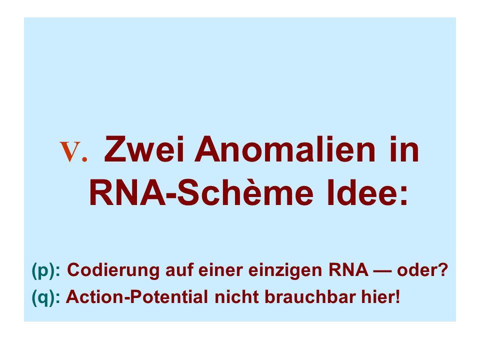 V. Zwei Anomalien in RNA-Schème Idee: