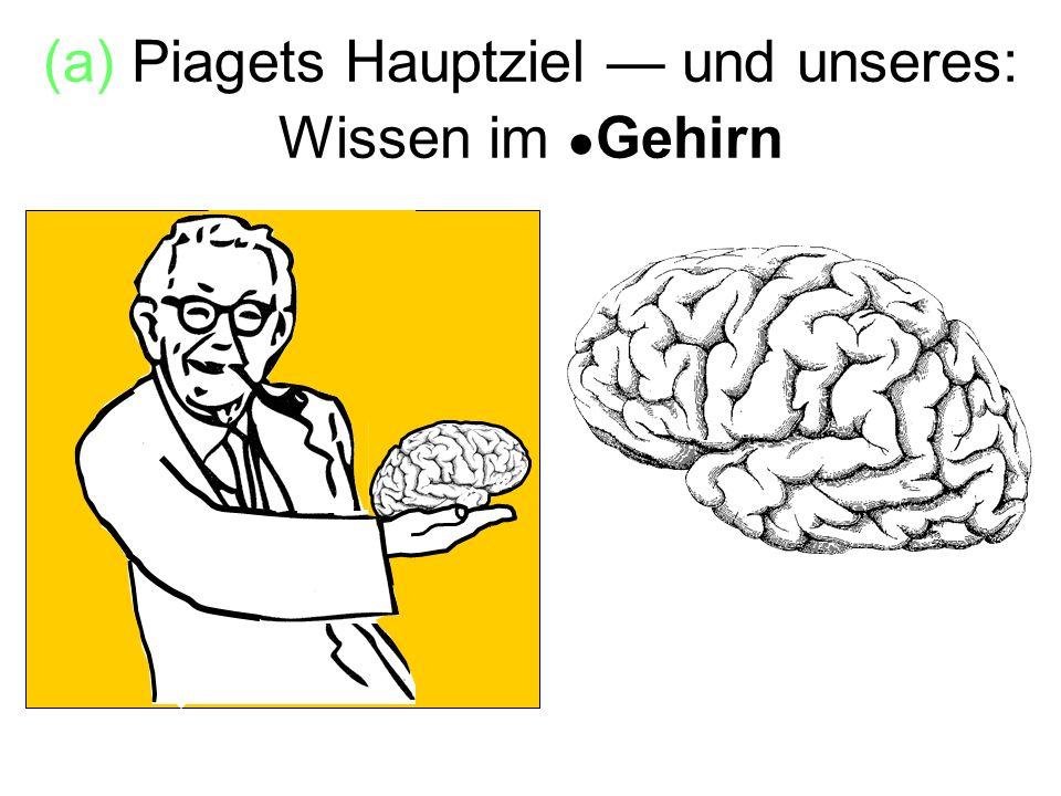 (a) Piagets Hauptziel — und unseres: Wissen im ●Gehirn