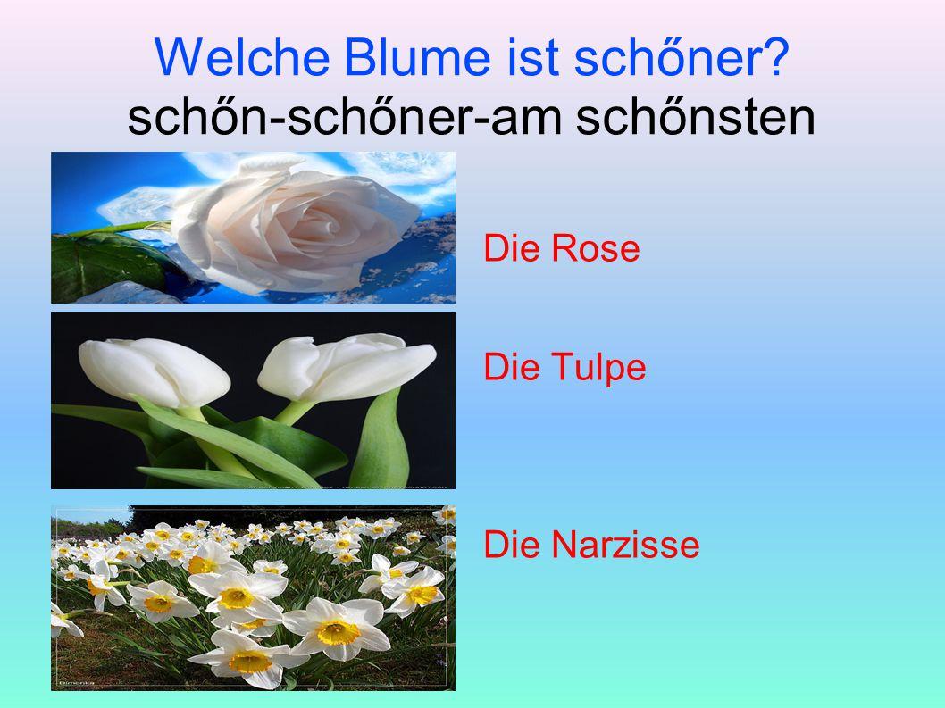 Welche Blume ist schőner schőn-schőner-am schőnsten