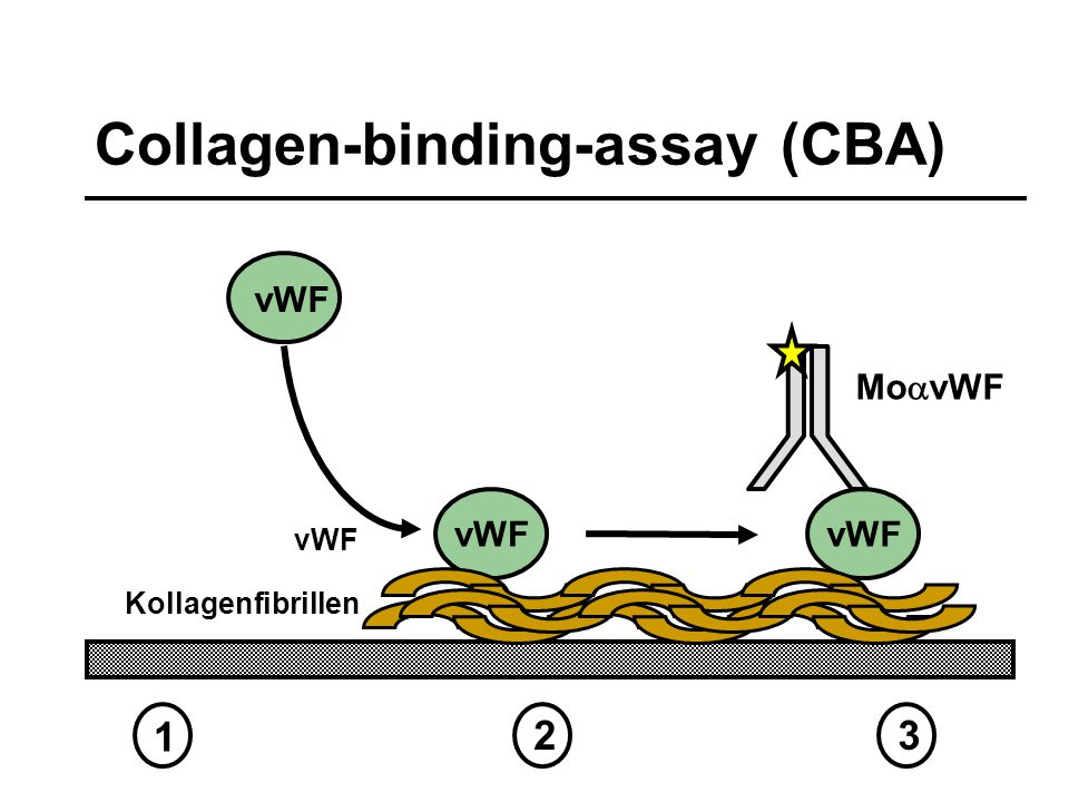 Collagen-binding-assay (CBA)