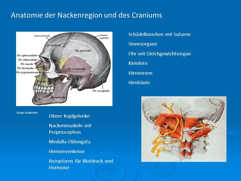 Anatomie der Nackenregion und des Craniums