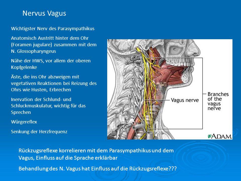 Nervus Vagus Wichtigster Nerv des Parasympathikus. Anatomisch Austritt hinter dem Ohr (Foramen jugulare) zusammen mit dem N. Glossopharyngeus.