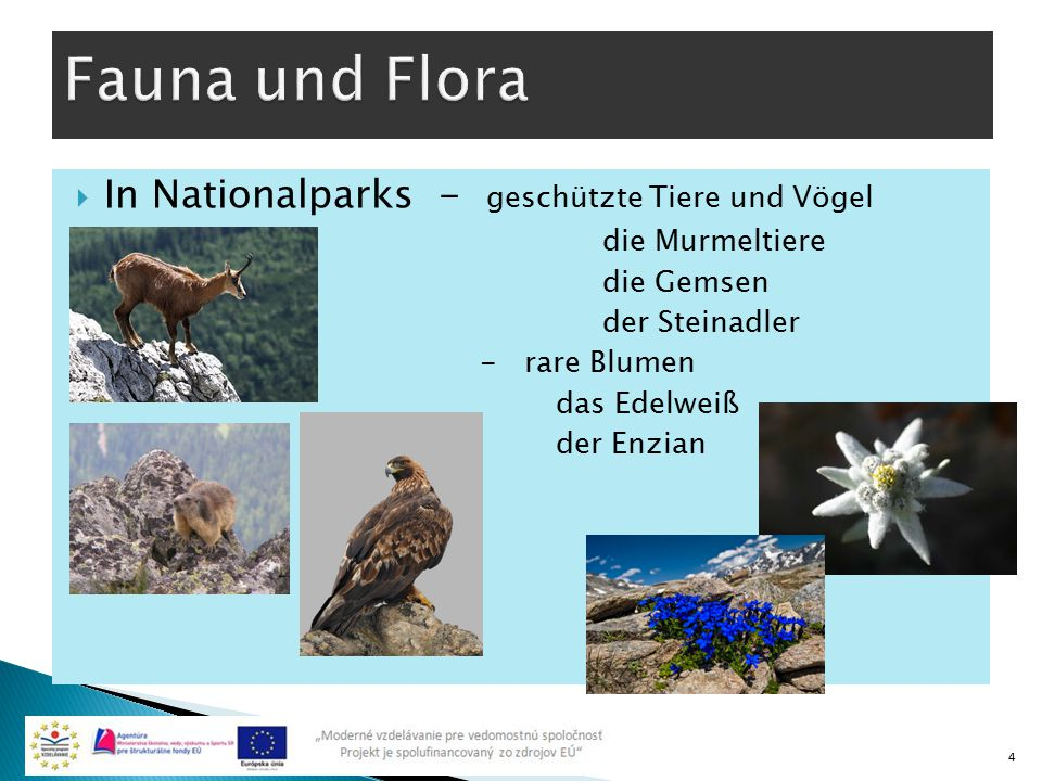 Fauna und Flora In Nationalparks - geschützte Tiere und Vögel