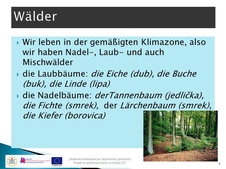 Wälder Wir leben in der gemäßigten Klimazone, also wir haben Nadel-, Laub- und auch Mischwälder