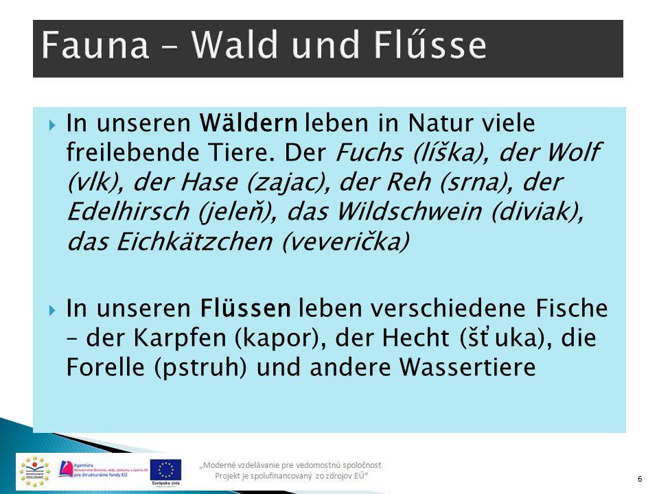 Fauna – Wald und Flűsse