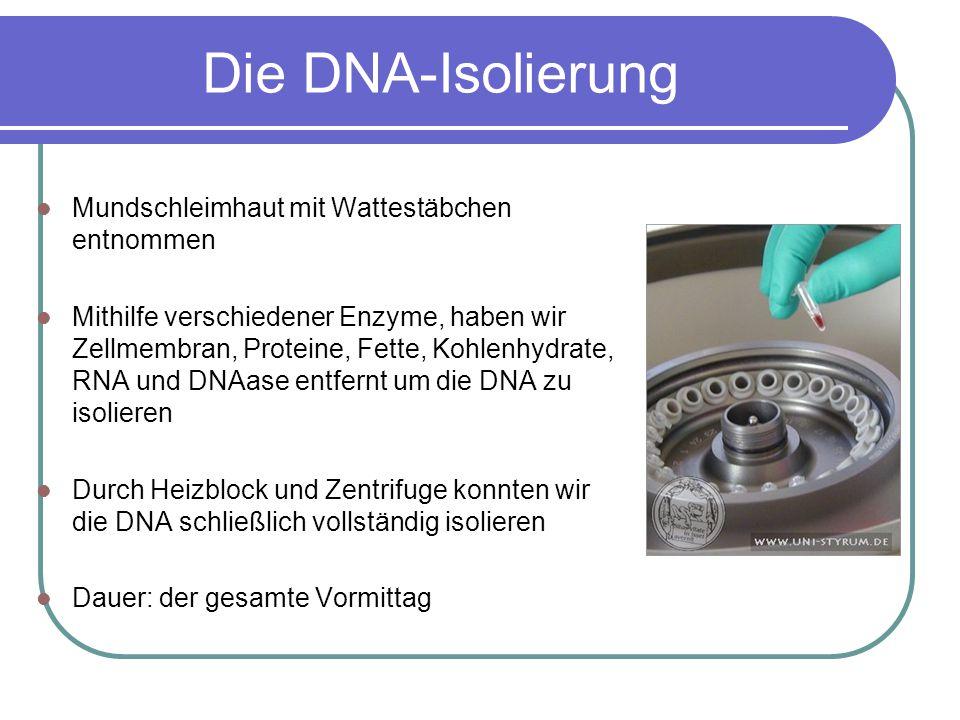 Die DNA-Isolierung Mundschleimhaut mit Wattestäbchen entnommen